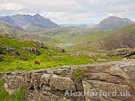 Red deer on Sgurr na Stri's grassy slopes, with the mountains of Sgurr nan Gillean and Marsco in the background