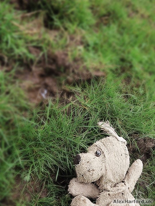 Beige dog-type teddy bear in mud and grass