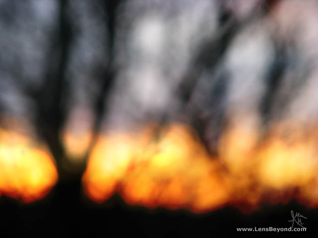 Blurred out trees and fiery sunset