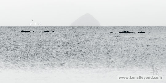Ailsa Craig island, with seabirds and foreground rock. Black and white photo by Alex Harford