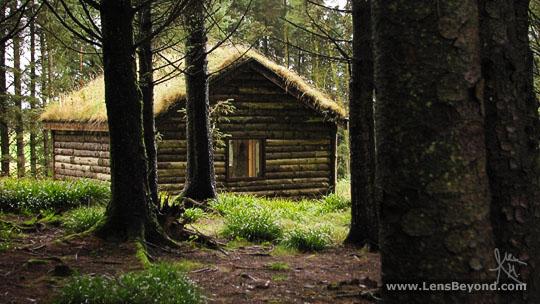 Log cabin library, Eas Mor forest