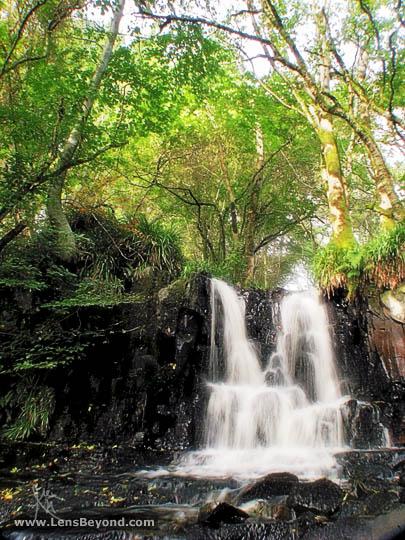 Waterfall and trees, Glenashdale Wood