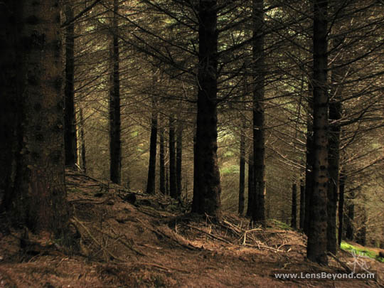 Glenashdale Wood tree cover