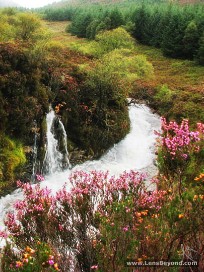 Waterfall, river and pink flowers