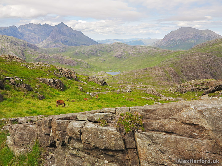 Red deer on Sgurr na Stri's grassy slopes, with the mountains of Sgurr nan Gillean to the left and Marsco to the right